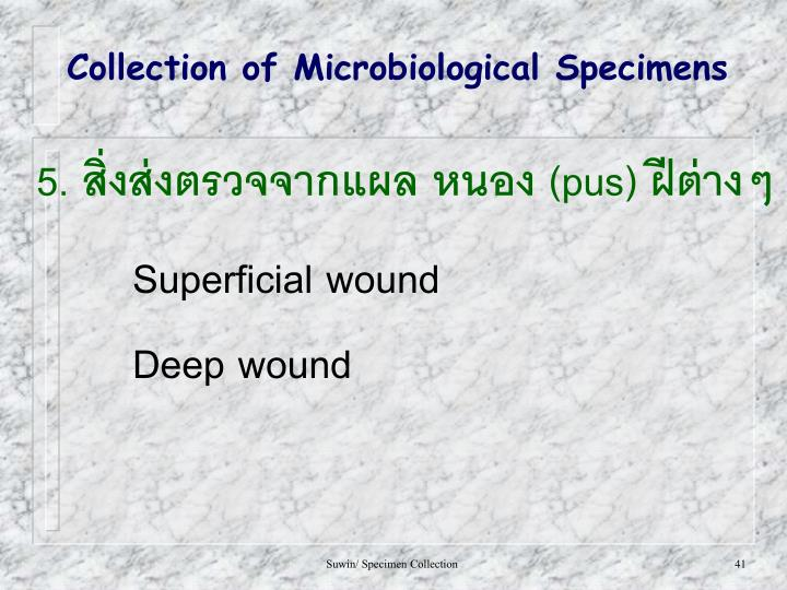 Collection of Microbiological Specimens