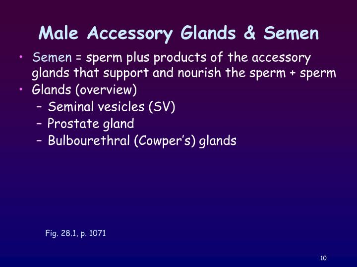 Male Accessory Glands & Semen