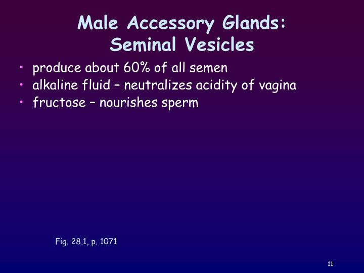 Male Accessory Glands: