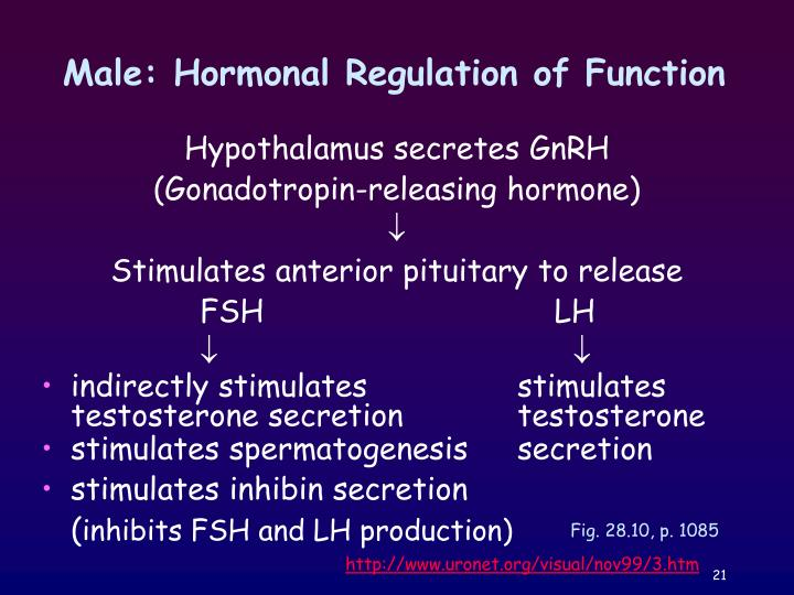 Male: Hormonal Regulation of Function