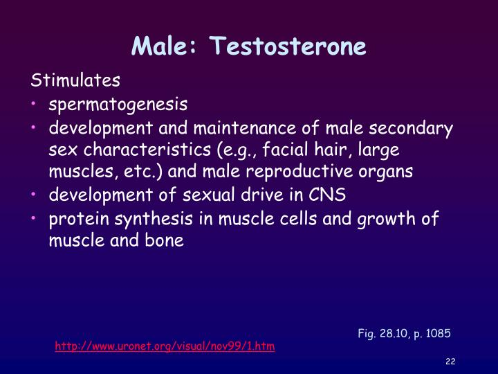 Male: Testosterone