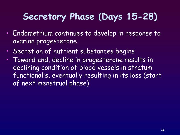 Secretory Phase (Days 15-28)