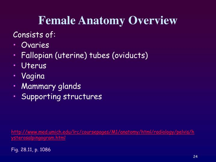 Female Anatomy Overview