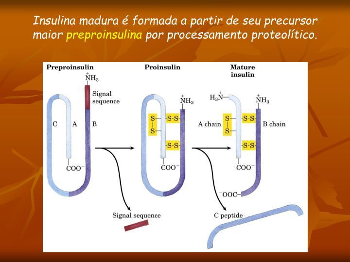 Insulina madura é formada a partir de seu precursor maior