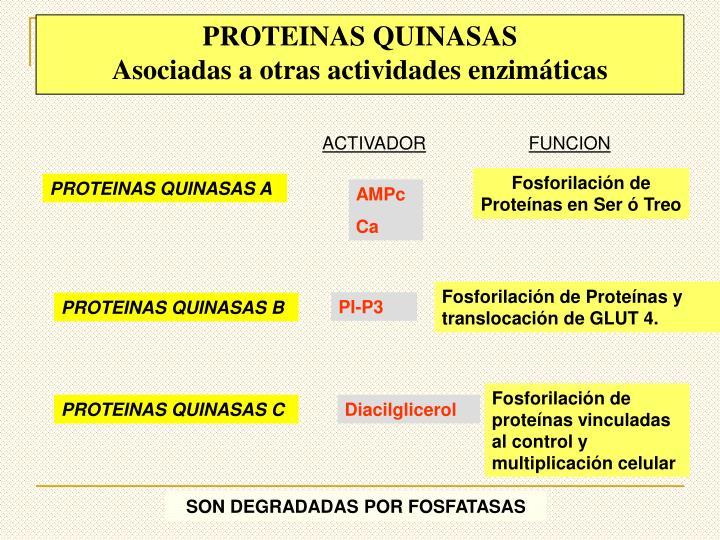PROTEINAS QUINASAS