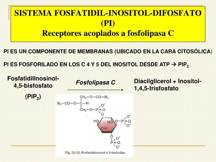 SISTEMA FOSFATIDIL-INOSITOL-DIFOSFATO (PI)