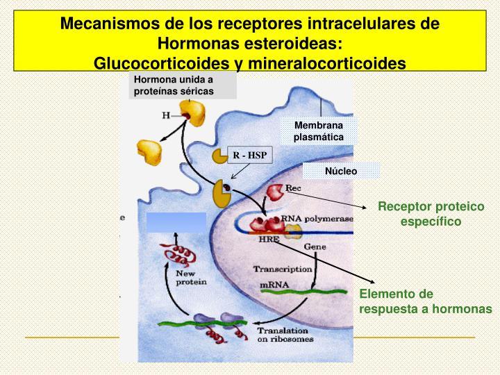 Hormona unida a proteínas séricas