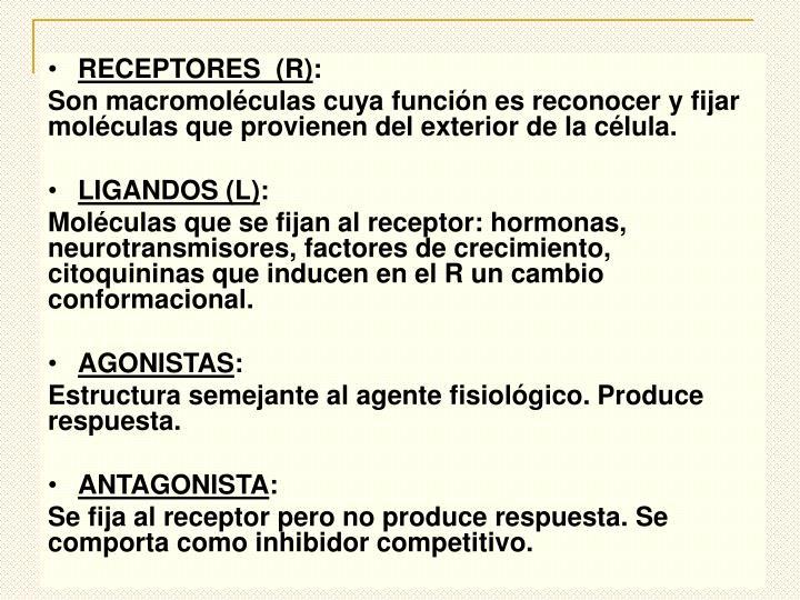 RECEPTORES  (R)