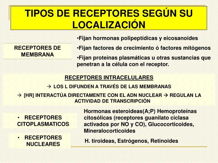 TIPOS DE RECEPTORES SEGÚN SU LOCALIZACIÓN