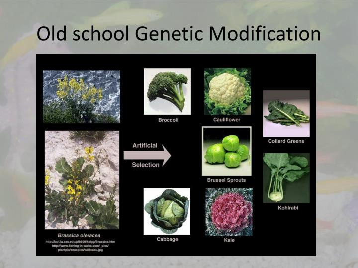 Old school Genetic Modification