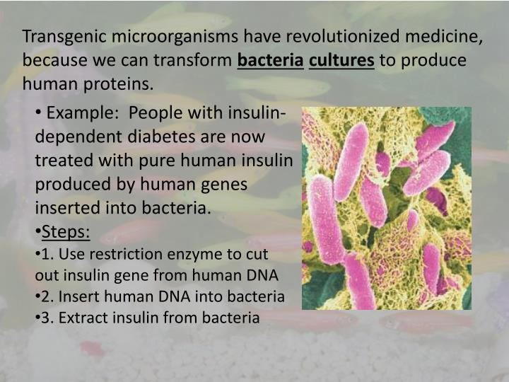 Transgenic microorganisms have revolutionized medicine, because we can transform
