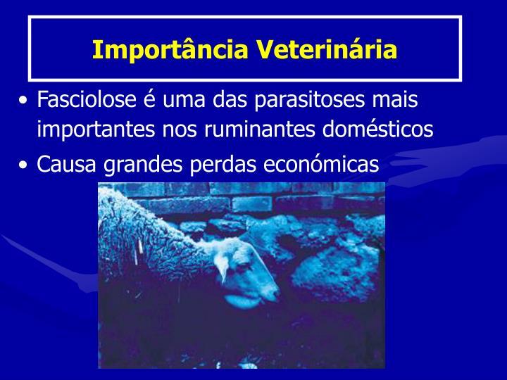 Importância Veterinária