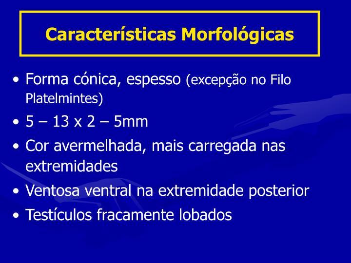 Características Morfológicas