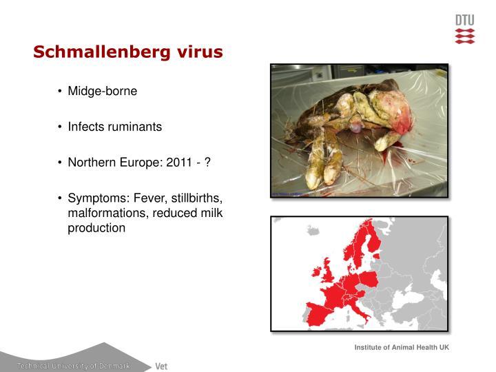 Schmallenberg virus
