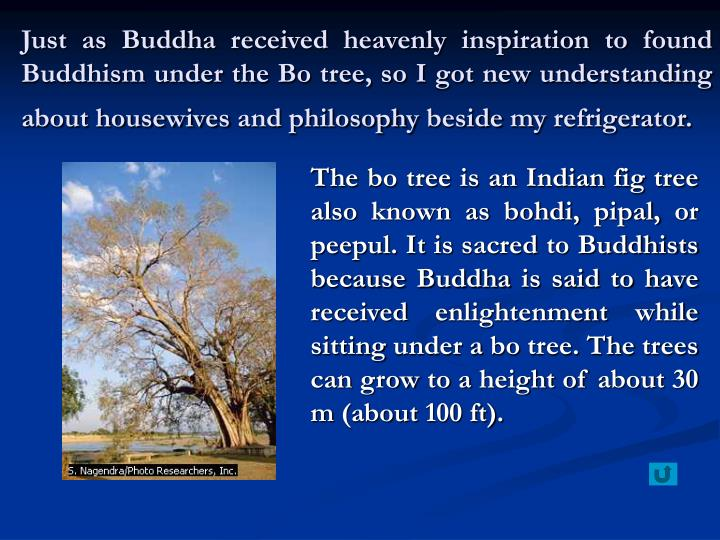 Just as Buddha received heavenly inspiration to found Buddhism under the Bo tree, so I got new understanding about housewives and philosophy beside my refrigerator.