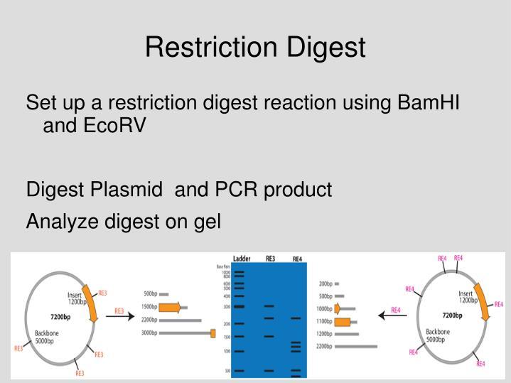 Restriction Digest