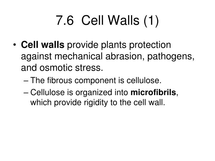 7.6  Cell Walls (1)