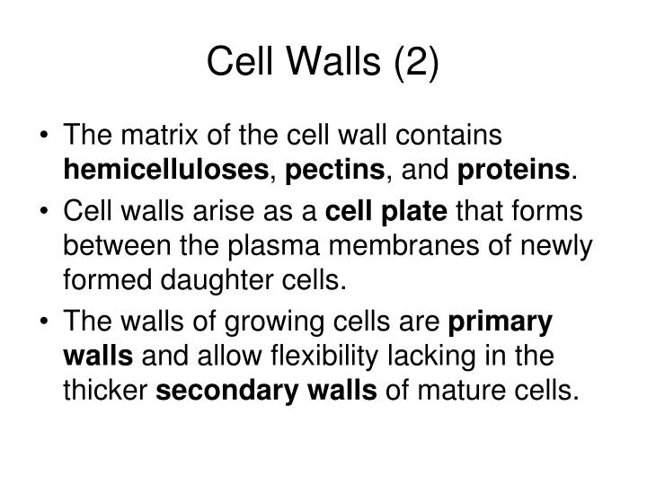 Cell Walls (2)