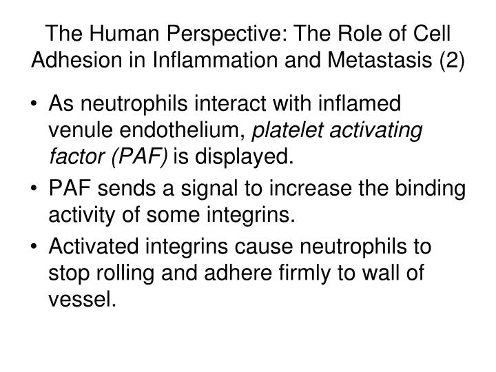 The Human Perspective: The Role of Cell Adhesion in Inflammation and Metastasis (2)