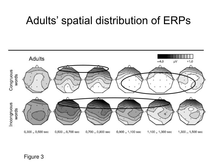 Adults' spatial distribution of ERPs