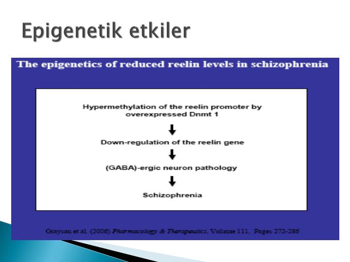Epigenetik