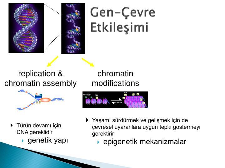 Gen-Çevre Etkileşimi