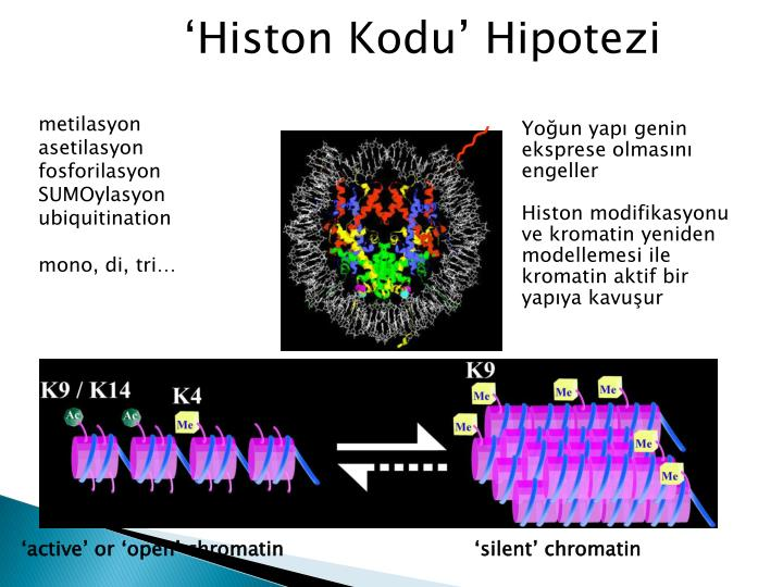 'active' or 'open' chromatin