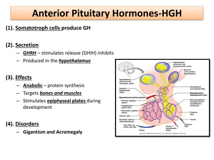 Anterior Pituitary Hormones-HGH
