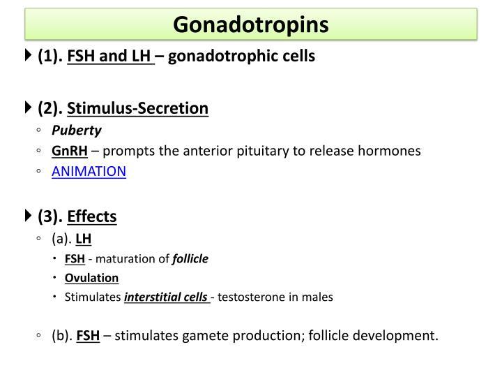 Gonadotropins