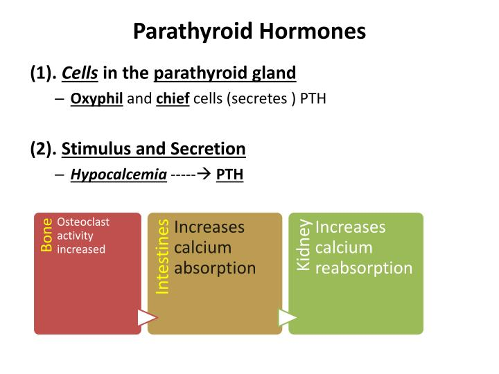 Parathyroid Hormones