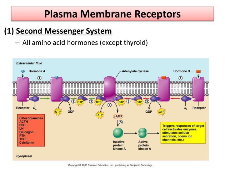 Plasma Membrane Receptors