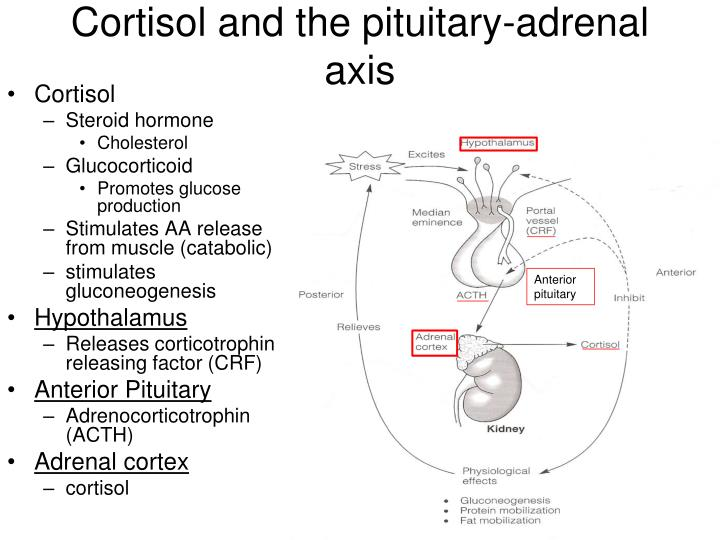 Cortisol and the pituitary-adrenal axis