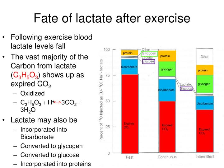 Fate of lactate after exercise