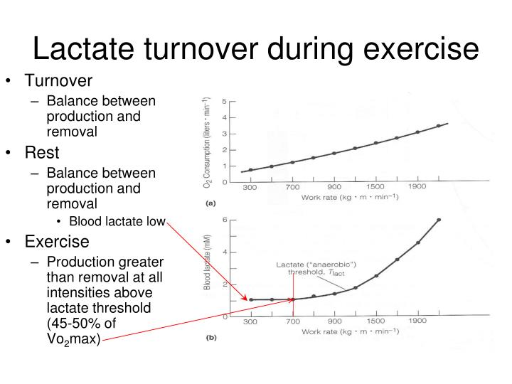 Lactate turnover during exercise
