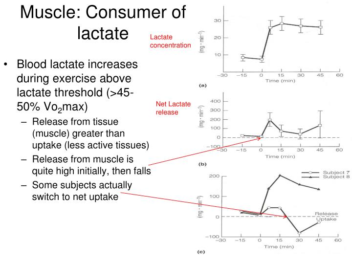 Muscle: Consumer of lactate