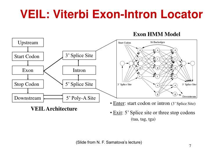 Exon HMM Model