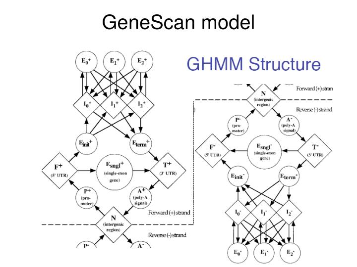 GeneScan model