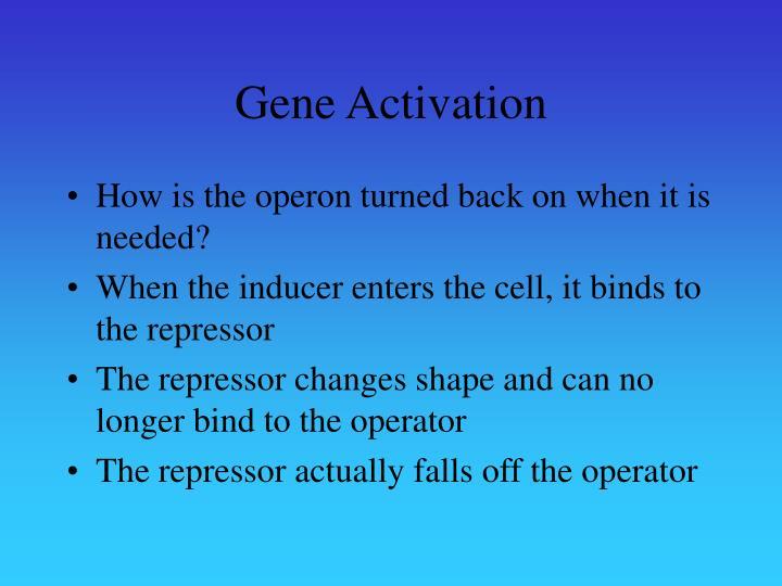 Gene Activation