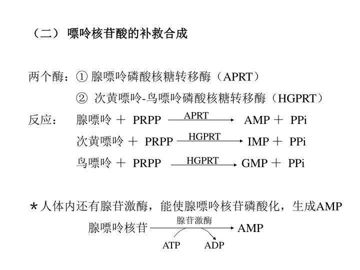 (二) 嘌呤核苷酸的补救合成