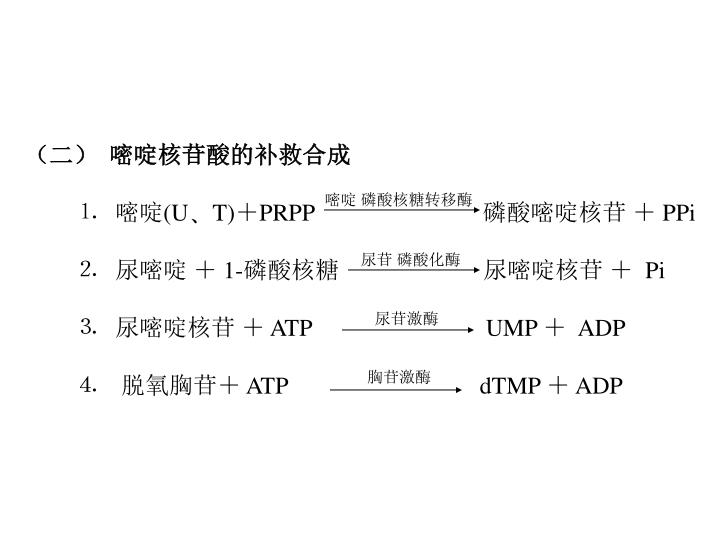 (二)  嘧啶核苷酸的补救合成
