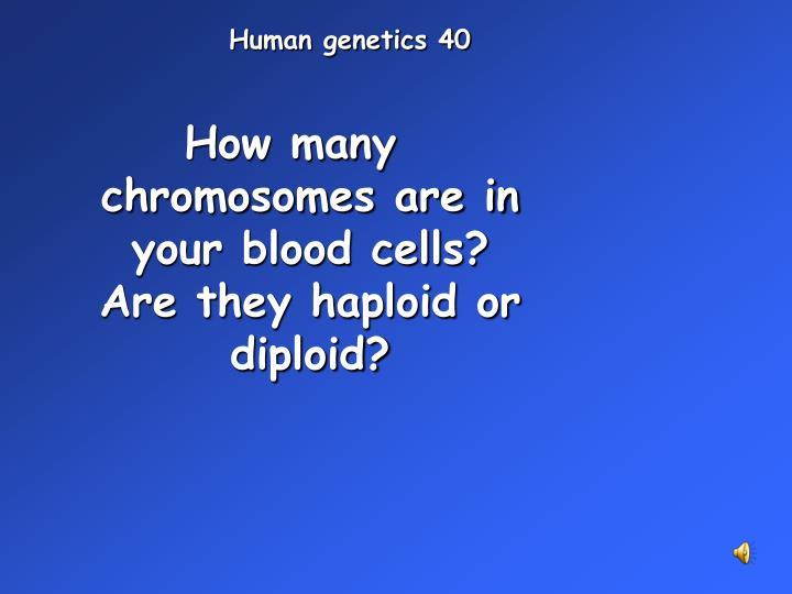 Human genetics 40