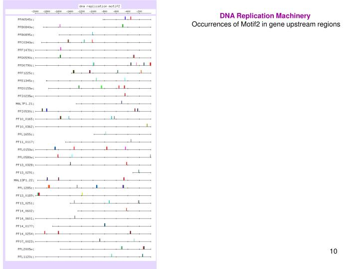 DNA Replication Machinery