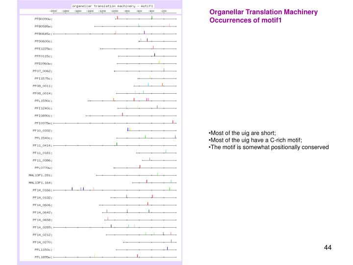Organellar Translation Machinery