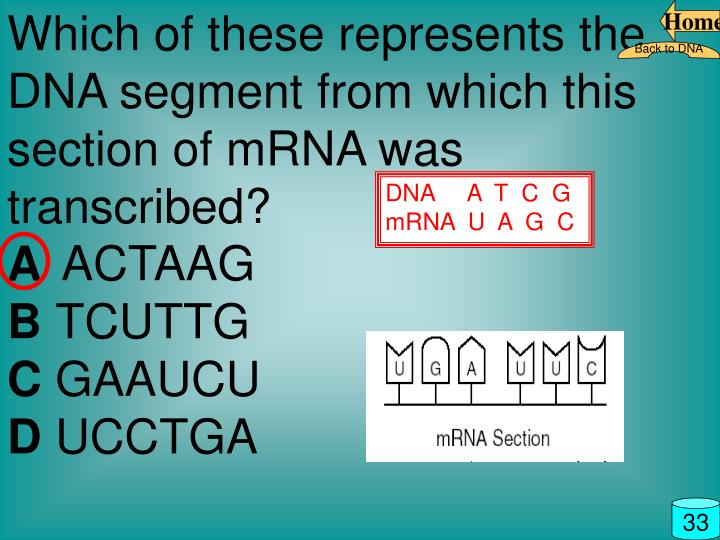 Which of these represents the DNA segment from which this section of mRNA was transcribed?