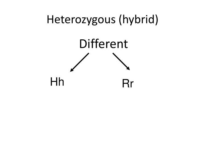 Heterozygous (hybrid)