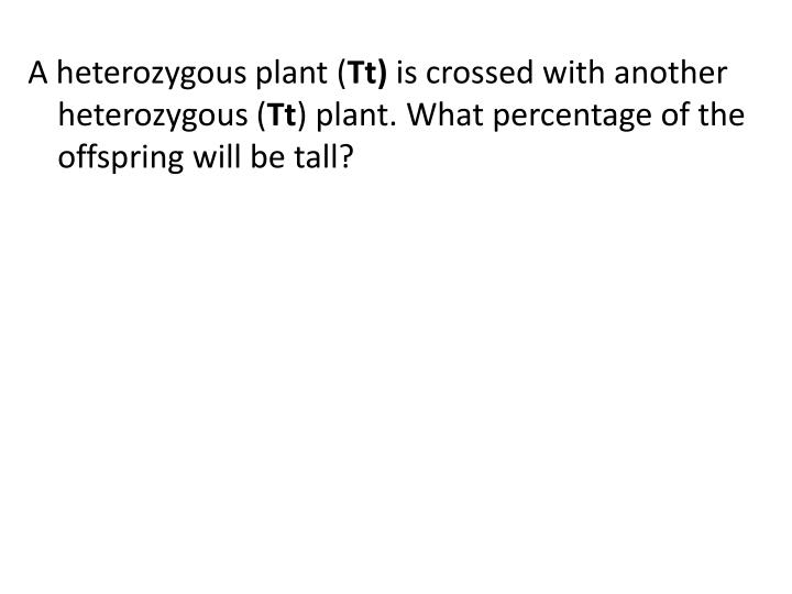 A heterozygous plant (