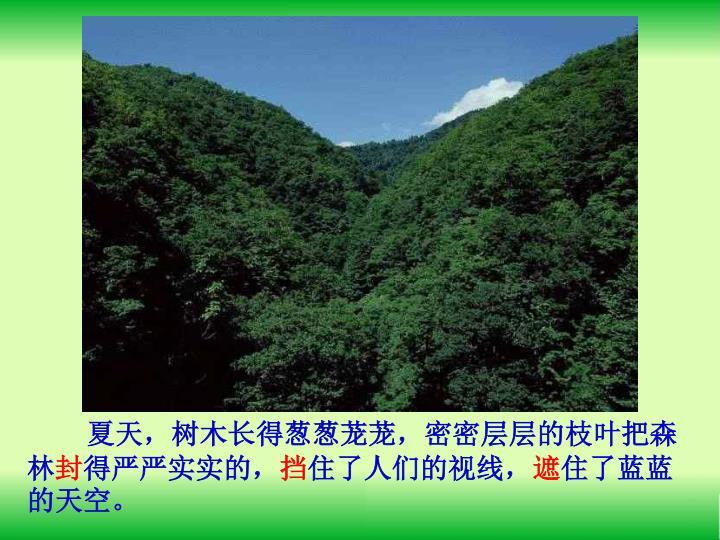 夏天,树木长得葱葱茏茏,密密层层的枝叶把森林