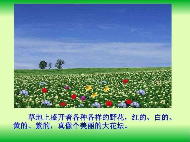草地上盛开着各种各样的野花,红的、白的、黄的、紫的,真像个美丽的大花坛。
