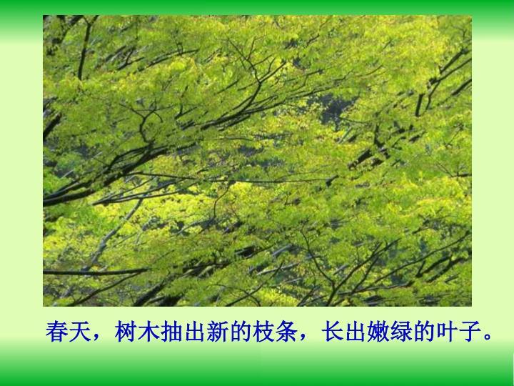 春天,树木抽出新的枝条,长出嫩绿的叶子。