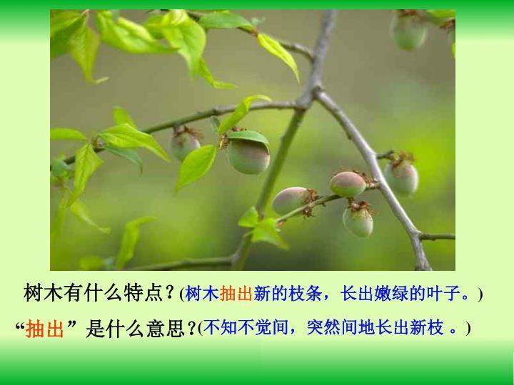 树木有什么特点?